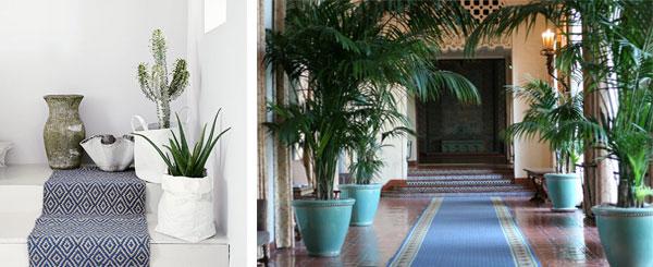 Растения для холла