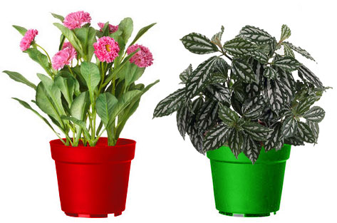 Неудачные сочетания растений и кашпо