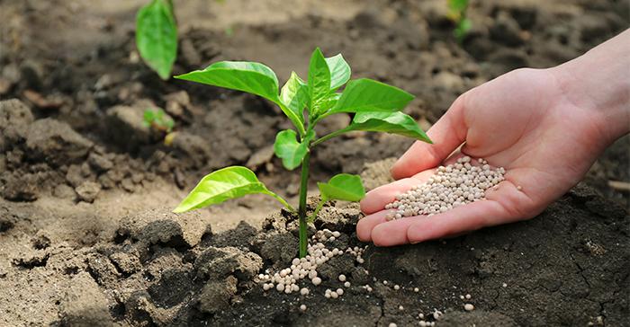 Применение азофоски в огороде