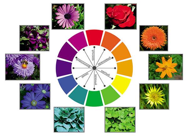 Цветовой круг с примерами растений