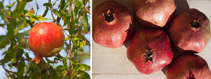 Плоды домашнего граната