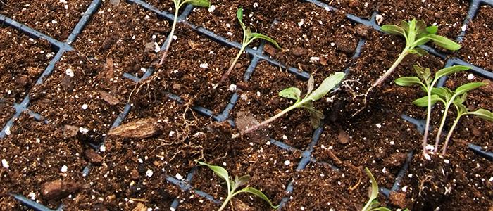 Грунт для рассады томатов, огурцов, перцев