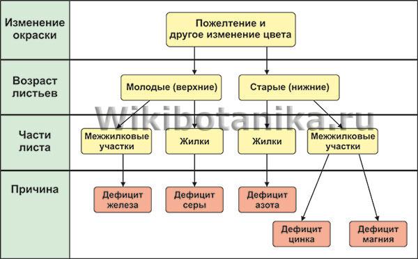 Таблица различных видов хлороза