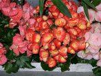 Самые капризные домашние растения
