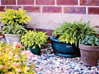 Карантин растений
