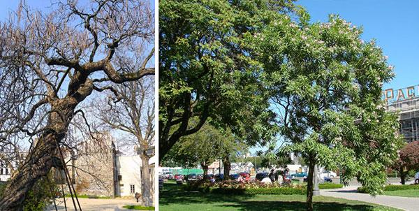 Дерево в ландшафтном дизайне