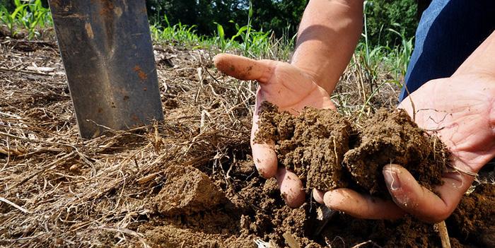 Кофейный жмых как добавка к почве