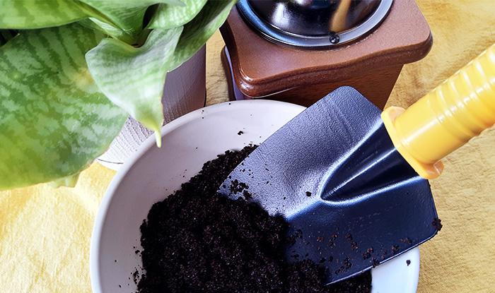 Кофе для домашних растений