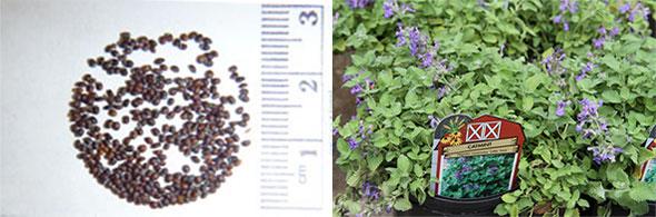 Семена и их выращивание