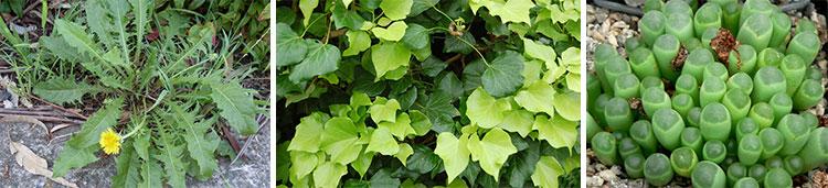 Листья растений в зависимости от освещенности