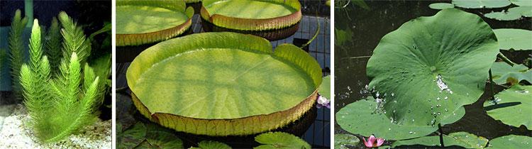 Листья водных растений