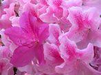 Цветы в доме приметы и суеверия
