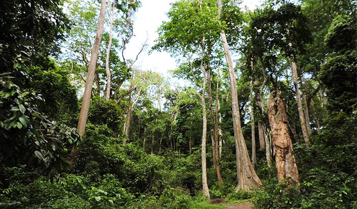 Деревья в природе