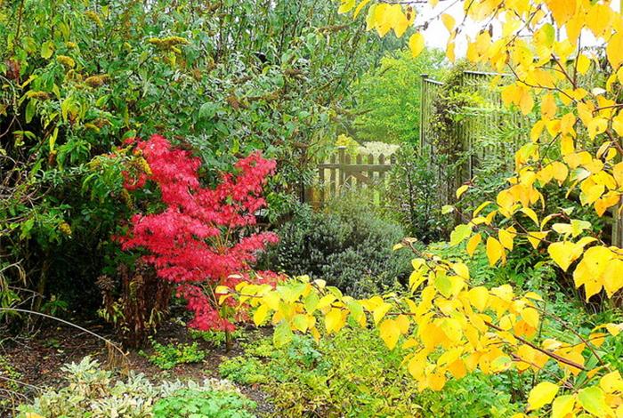 Готовим сад и огород к зиме