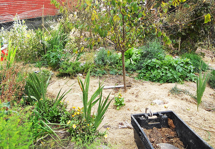 Мульчирование сада осенью