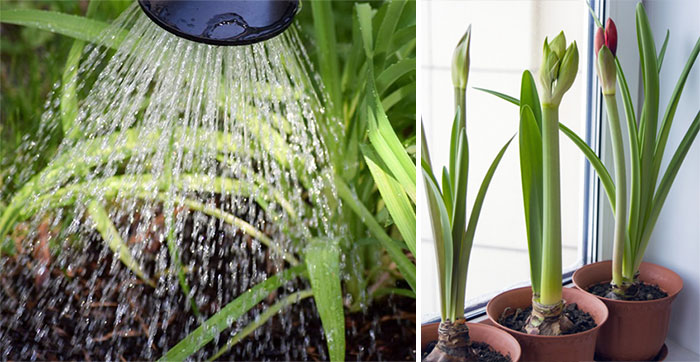 Полив растений в помещении