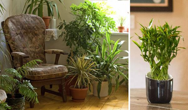 Зеленый уголок в вашей квартире
