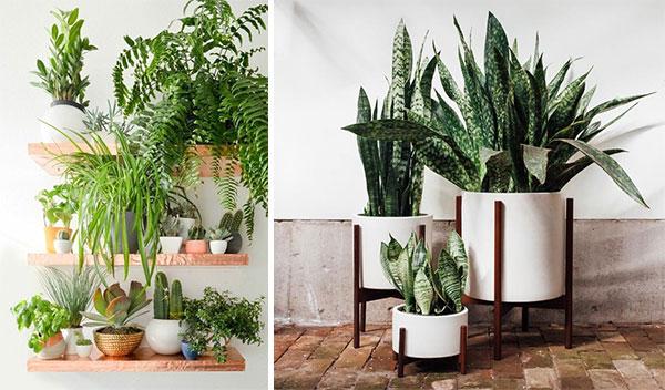 Разнообразие видов декоративной флоры