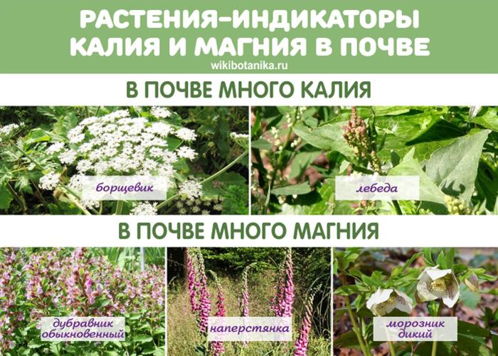 Растения-индикаторы калия и магния в грунте