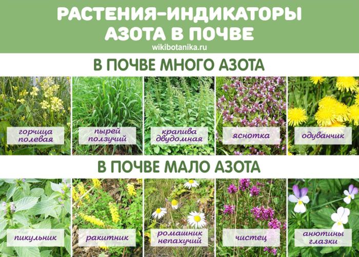 Растения-индикаторы азота в почве