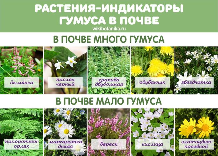 Растения-индикаторы недостатка и избытка гумуса