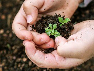 Растения-индикаторы почв