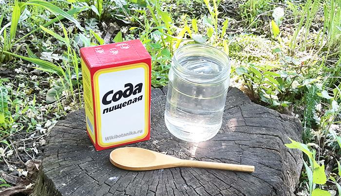 Как применять соду в саду, огороде и на дачном участке