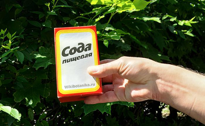 Сода в огороде, способы использования