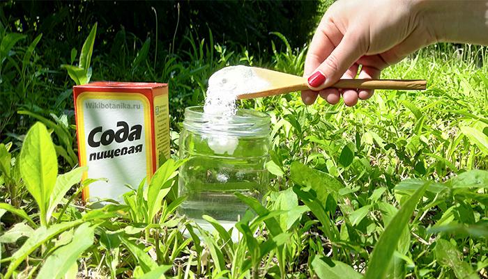 Как использовать соду против насекомых-вредителей