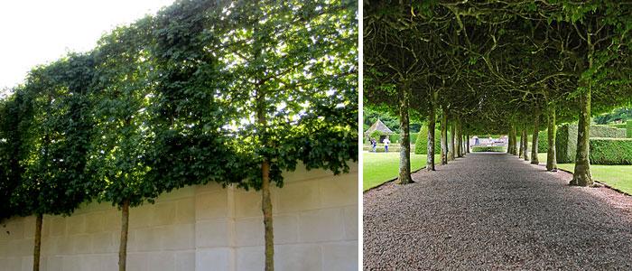 Плоские деревья