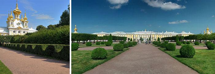 Петергоф - садовый топиар