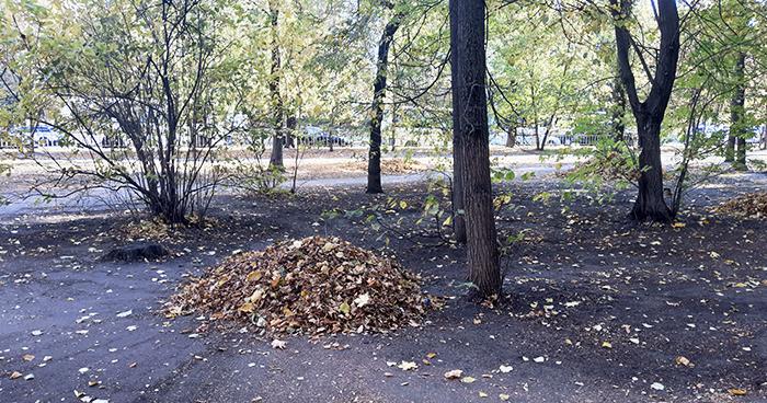 Нужно ли убирать осенние листья