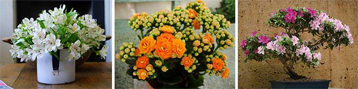Цветущие домашние растения, нуждающиеся в подкормке
