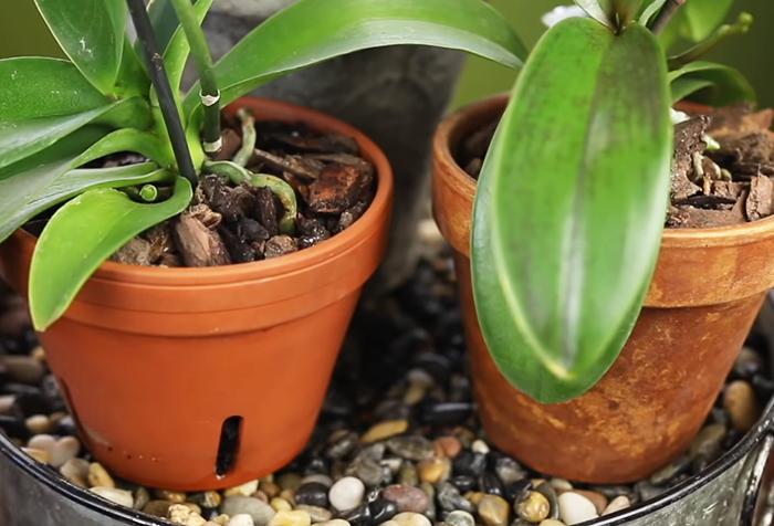 Как использовать вермикулит для домашних растений