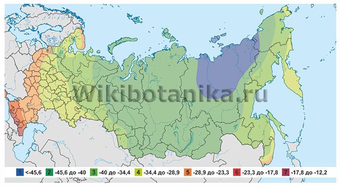 Зоны морозостойкости России